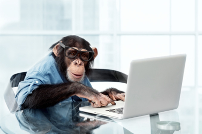 Banner Image Avanti Consulting Monkey with Computer